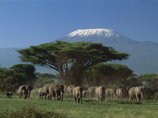 Elephants In Kilimanjaro National Park