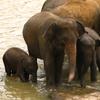 Elephant Orphanage Near