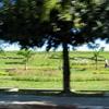 Inya Lake Park Grounds 2 C Yangon