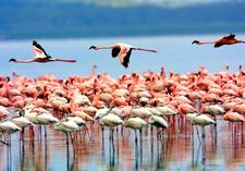 Lake Manyara Np2