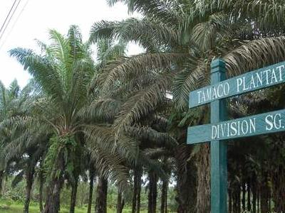 Lahad  Datu  Tamaco  Plantation