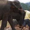 Pulling An Elephant