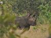 Rhinowalk