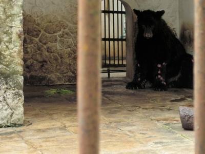 Surabaya Bear
