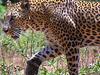 Leopards Paradise