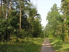 A Forest View At Schildhornweg