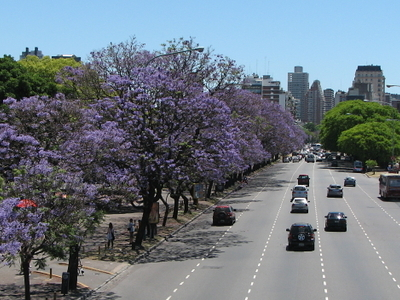 The Avenue On Its Route Towards The Barrio Parque Area