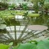 Pavilion Victoria