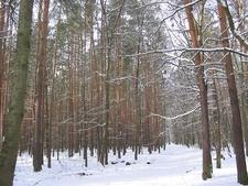 Grunewald In Winter