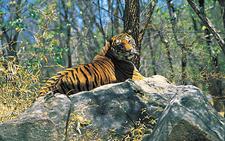 Periyar Tiger Reserve1