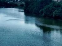 Pavana River