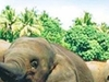 Haniffas Holidays - Elephant Ophanage