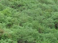 Baner-Pashan Biodiversity Park