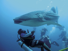 Cmm12 Diving02
