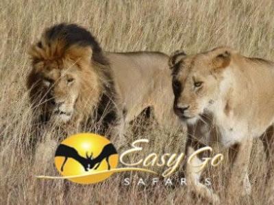 Easy Go Safari