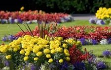 Flower Garden Labagh Botanical Garden Bangalore