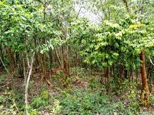 Forest At Kambalakonda Visakhapatnam