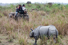 Kaziranga Elephant Ride 1
