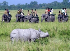 Kaziranga Elephant Safari