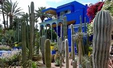 Majorelle Gardens Marrake 007
