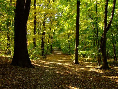 One Of Many Forest Paths