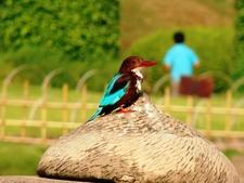 Pu La Deshpande Garden Birds