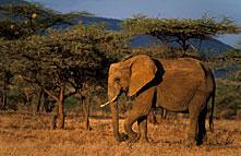 Samburu National Park 025