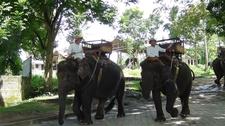01 Elephant