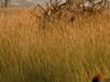 Baloon Safari In Serengeti
