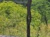 Elephant Camp Victoria Falls Zimbabwe