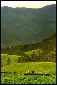 Nyungwe Rain Forest