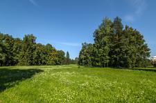Pavlovsk Park In Summer