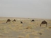 Circuit Sud Du Maroc 088 200 0