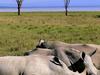 Rhinoinngorongorocrater