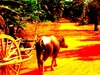 Sunsai Waterbuffalo Cart Tours Main 2