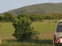Aramati Safaris