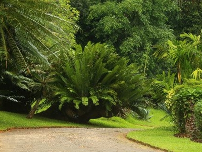 Peradeniya Royal Botanical Garden Way