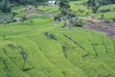 Khonoma