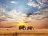 Africa Safari Elephants Great Plain
