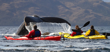 Whale-watching In The Chilean Patagonia