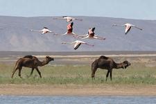 Birding Tours Morocco