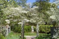 Brookgreen Gardens Site