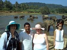 Elephant Orphangae Tour