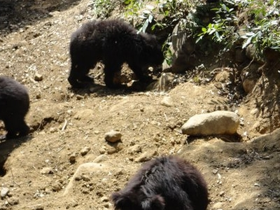 Sloth Bears In Their Near-Natural Habitat In The Zoo