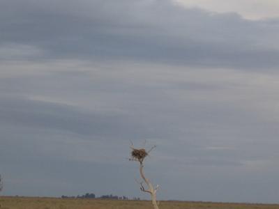 An Eagle's Nest On The Old Man Plain