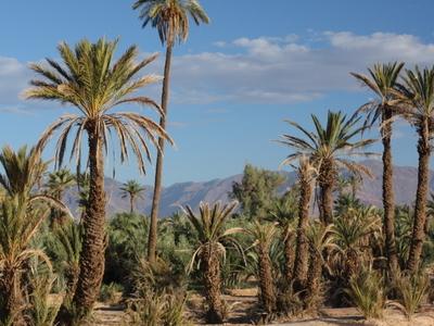 Palm Groves Around Town