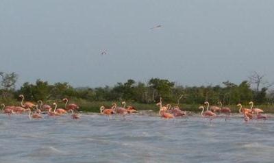 Flamingoes At The Lagoon