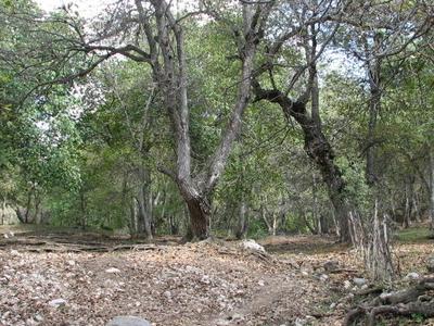 Walnut Forest In Arslanbob