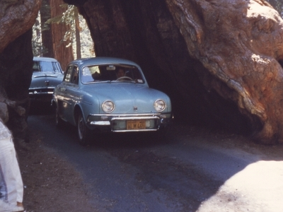 Wawona Tunnel Tree, 44 Years Later