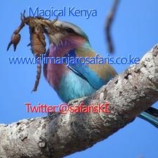 Aviary Photo 130860276470311543